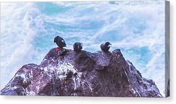 Canvas Print featuring the photograph Three Birds by Jonny D