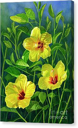 Three Bright Yellow Hibiscus Flowers Canvas Print by Sharon Freeman