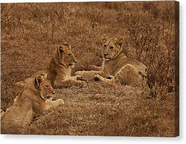 Three Brothers Canvas Print by Miranda  Miranda