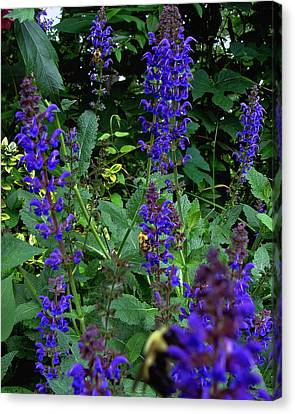Three Bumble Bees And Dephiniums Canvas Print by Martin Morehead