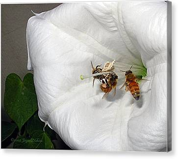 Canvas Print featuring the photograph Three Busy Bees by Joyce Dickens