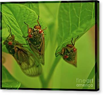 Three Cicadas Canvas Print