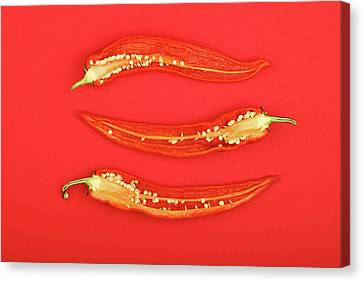 Three Cut Hot Chili Peppers On Red Background Canvas Print