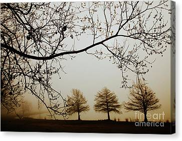 Canvas Print featuring the photograph Three Cypress In The Mist by Iris Greenwell