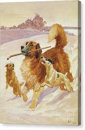 Doggy Cards Canvas Print - Three Dogs Playing In The Snow by John Charlton