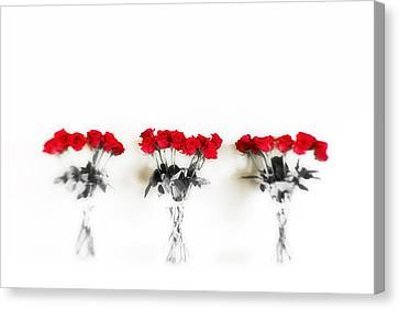 Three Dozen Roses Canvas Print by Scott Pellegrin