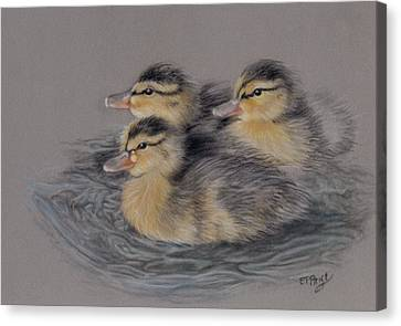 Three Ducklings Canvas Print by Edmund Price
