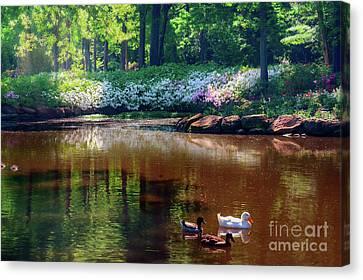 Three Ducks At The Azalea Pond Canvas Print