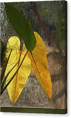Canvas Print featuring the photograph Three Exotic Leaves by Viktor Savchenko