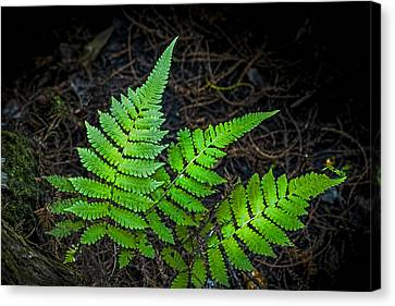 Wooden Building Canvas Print - Three Fern Night by Marvin Spates