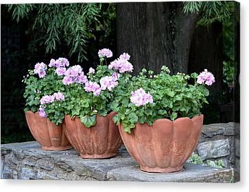 Canvas Print featuring the photograph Three Flower Pots by Deborah  Crew-Johnson