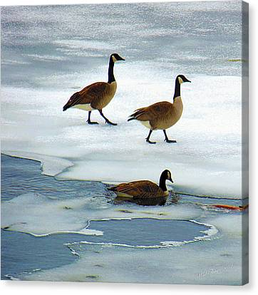 Three Geese Canvas Print by Wild Thing