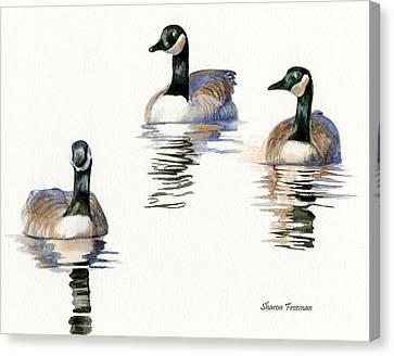 Three Geese With Black Necks Canvas Print by Sharon Freeman