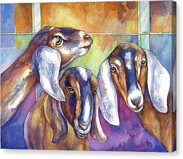 Three Goats Canvas Print by Peggy Wilson
