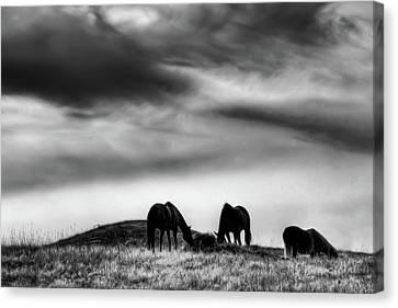 Three Horses On The Hill Canvas Print