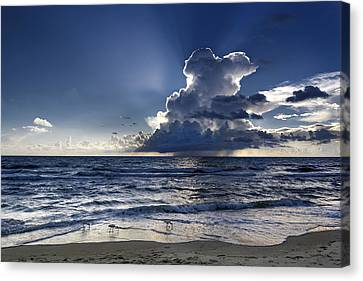 Canvas Print featuring the photograph Three Ibises Before The Storm by Steven Sparks