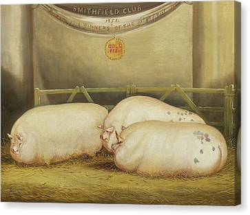 Three Improved Leicesters In A Pen At 1858 Smithfield Club Christmas Show Canvas Print by John Vine