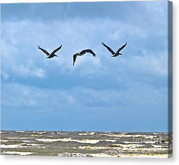Canvas Print featuring the photograph Three In Flight by Ken Frischkorn