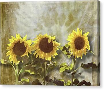 Three In The Sun Canvas Print