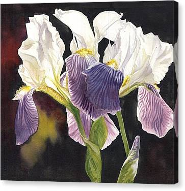 Three Irises Canvas Print by Alfred Ng