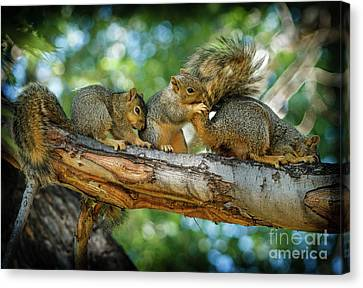 Fox Squirrel Canvas Print - Three Is A Crowd  by Robert Bales