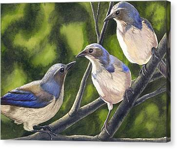 Three Jays Canvas Print by Catherine G McElroy