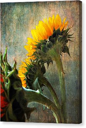 Canvas Print featuring the photograph Three by John Rivera
