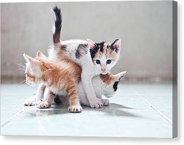 Three Kittens Canvas Print by Photos by Andy Le