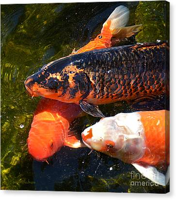 Canvas Print featuring the photograph Three Koi Waiting by Susan Wiedmann
