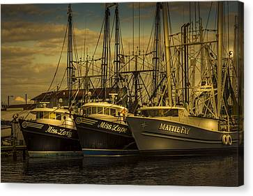 Three Ladies Of The Gulf Canvas Print by Marvin Spates
