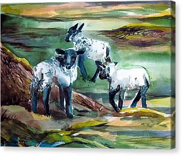 Three Lambs Canvas Print by Mindy Newman