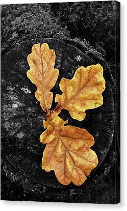 Three Leaves On Black Canvas Print