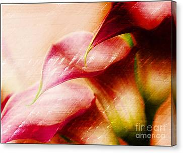 Three Lilies Canvas Print by Clare Bevan