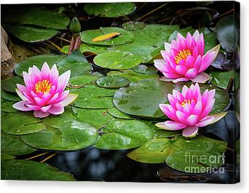 Three Lilies Canvas Print by Inge Johnsson