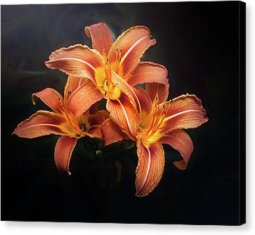 Warm Summer Canvas Print - Three Lilies by Scott Norris