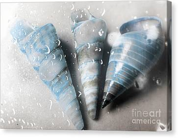 Three Little Trumpet Snail Shells Over Gray Canvas Print