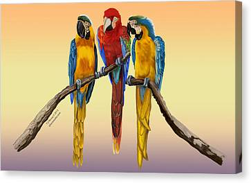Canvas Print featuring the painting Three Macaws Hanging Out by Thomas J Herring