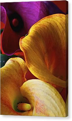 Three Moody Calla Lilies  Canvas Print by Garry Gay