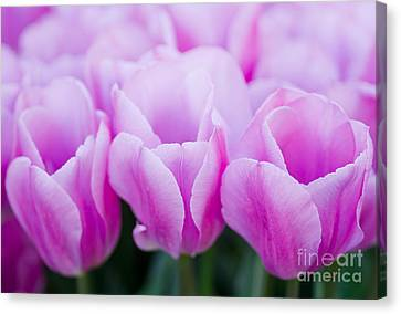 Three Of A Kind Canvas Print by Nick  Boren