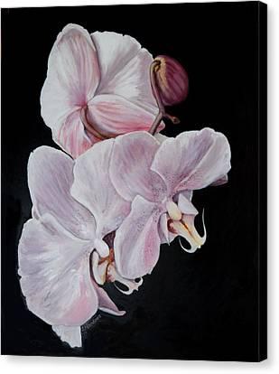 Three Orchids Canvas Print by Sandra Nardone