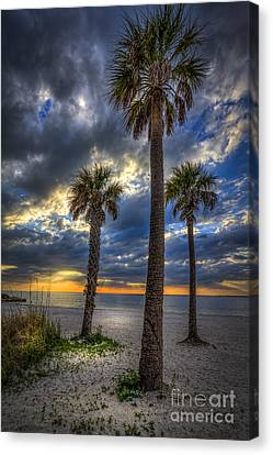 Three Palm Stew Canvas Print by Marvin Spates