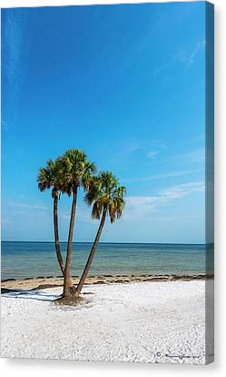 Tropical Beach Canvas Print - Three Palms by Marvin Spates