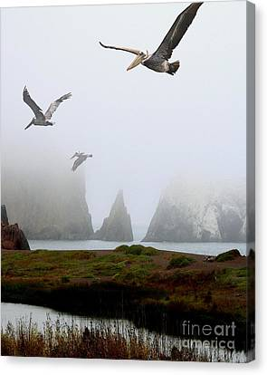 Three Pelicans In Portrait Canvas Print by Wingsdomain Art and Photography