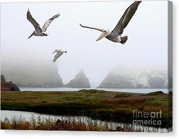 Three Pelicans Canvas Print by Wingsdomain Art and Photography