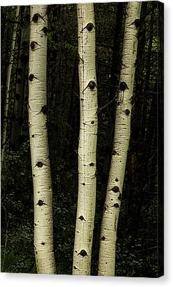 Canvas Print featuring the photograph Three Pillars Of The Forest by James BO Insogna