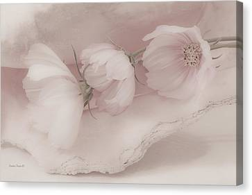 Three Pink Cosmo Flowers Canvas Print