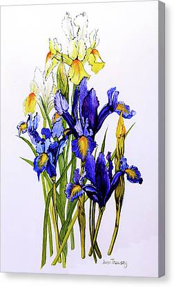 Purple. Iris. Buds Canvas Print - Three Purple And Two Yellow Iris With Buds by Joan Thewsey
