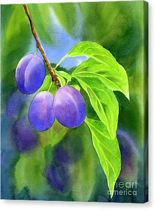 Three Purple Plums With Background Canvas Print by Sharon Freeman