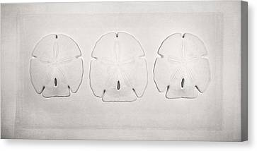 Three Sand Dollars Canvas Print by Scott Norris