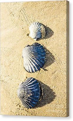 Three Scallop Shells Canvas Print